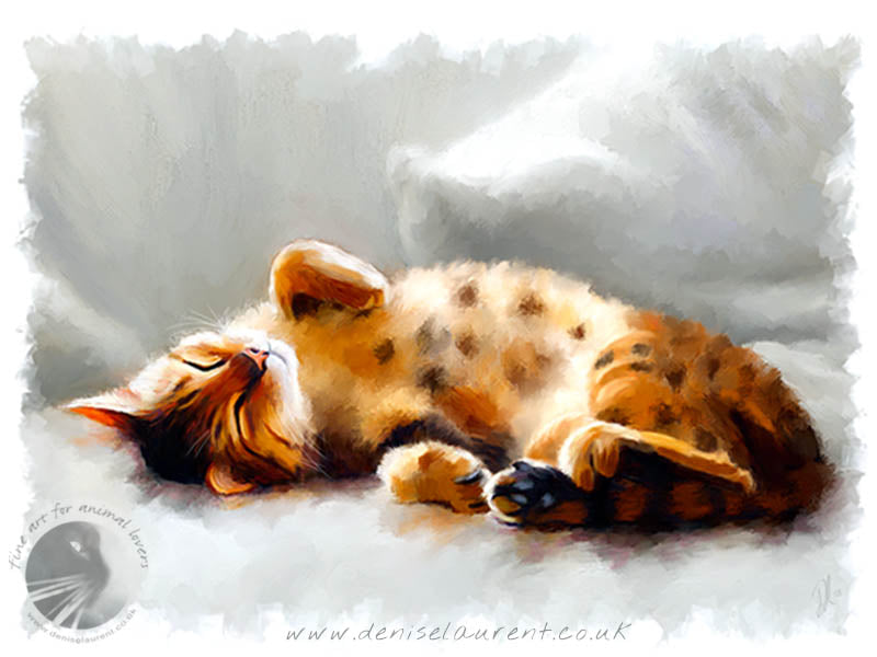 All Curled Up - Bengal Cat Print