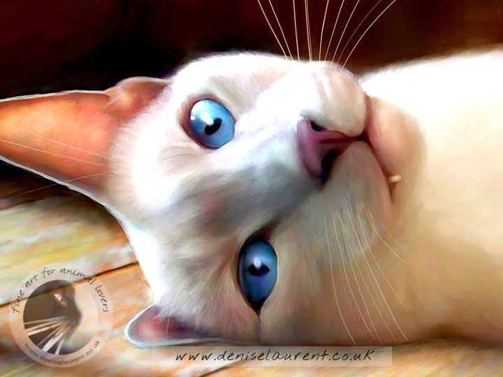 siamese cat lying on the floor art print