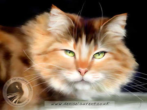 fine art print of a long haired calico cat