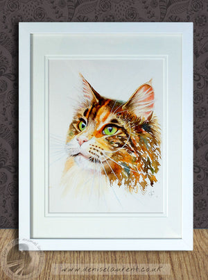 Drama Queen - Maine Coon Cat Watercolour Painting