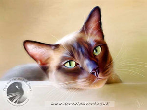 burmese or tonkinese cat art print