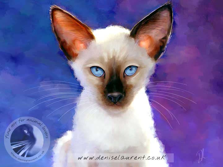 siamese kitten on blue background art print