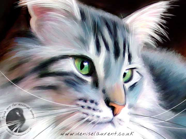 silver maine coon cat on a table art print