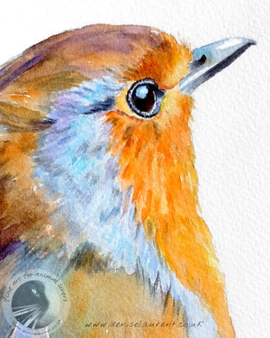Robin Portrait - Bird Print