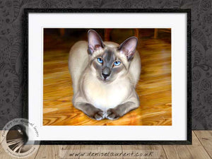 blue eyed siamese cat wallart framed