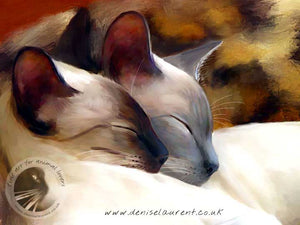 Sleeping Siamese - Siamese Cat Print