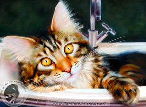 Taz In the Sink - Maine Coon Cat Print