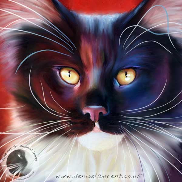 fine art print of a black and white main coon cat on a red background