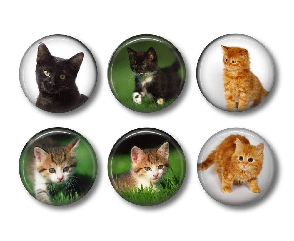 Kittens    fridge magnets