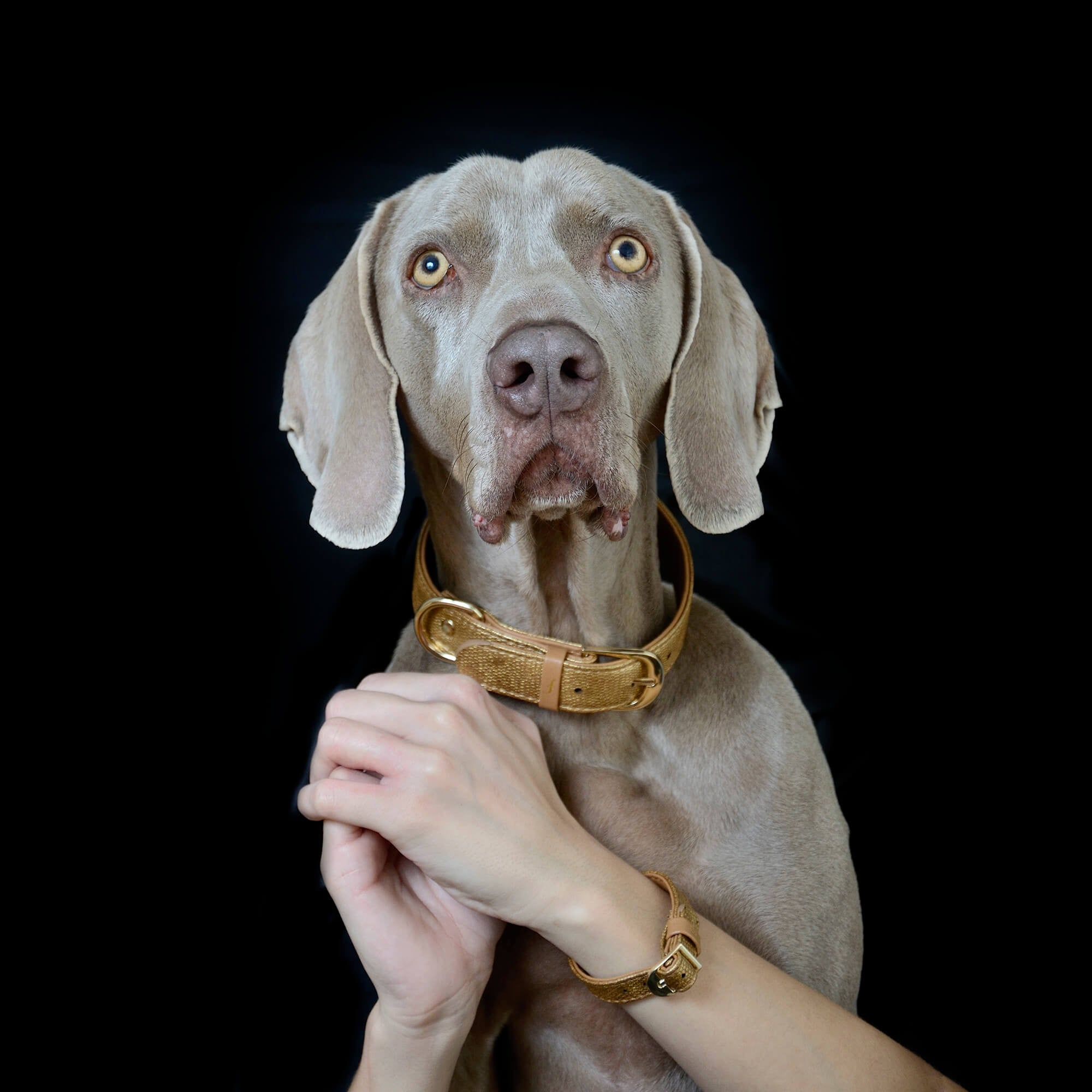 Golden Dog Friendship Collar and Bracelet