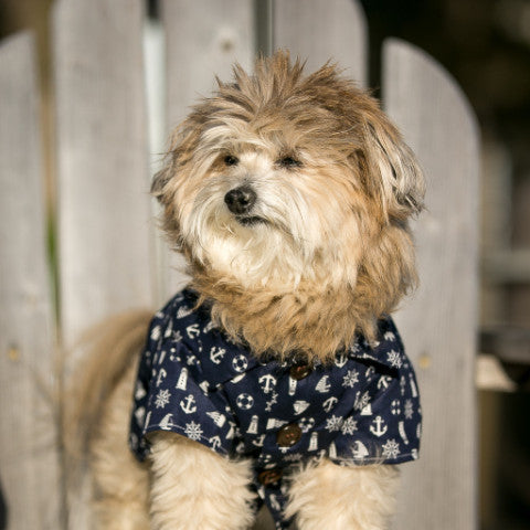 Cape Cod Classic Shirt by Dog Threads | Navy Blue Nautical Anchor Dog Shirt