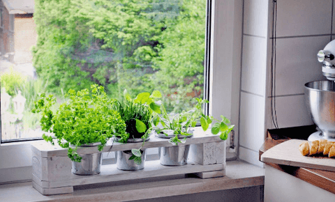 Bring Your Herbs Indoors This Autumn