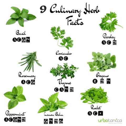 9 Quick Facts when growing Indoor Herbs