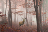 Misty Forest - Canvas