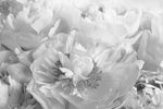 Peony Black and White - Canvas