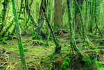Green Woods - Full Wall Mural