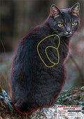 Bowhunters - Feral Cat Target