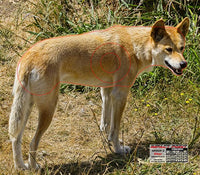 Group 2 - Dingo Target - Australian Feral Set