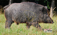 Bowhunters - Feral Pig Target