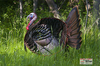 Bowhunter - Turkey Target