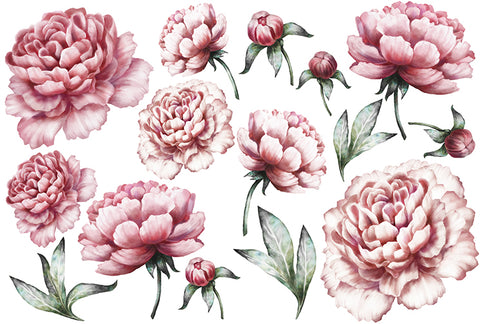 Peony Collection 2