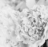 Pink Posy BW - Full Wall Mural