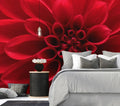 Red Delight - Full Wall Mural