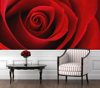 Roses are Red - Full Wall Mural