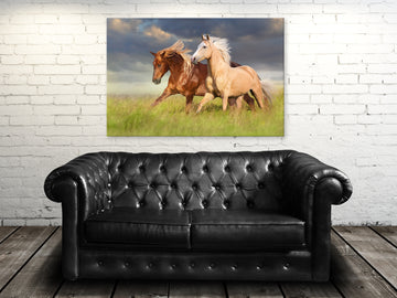 Wild and Free  - Acrylic Print