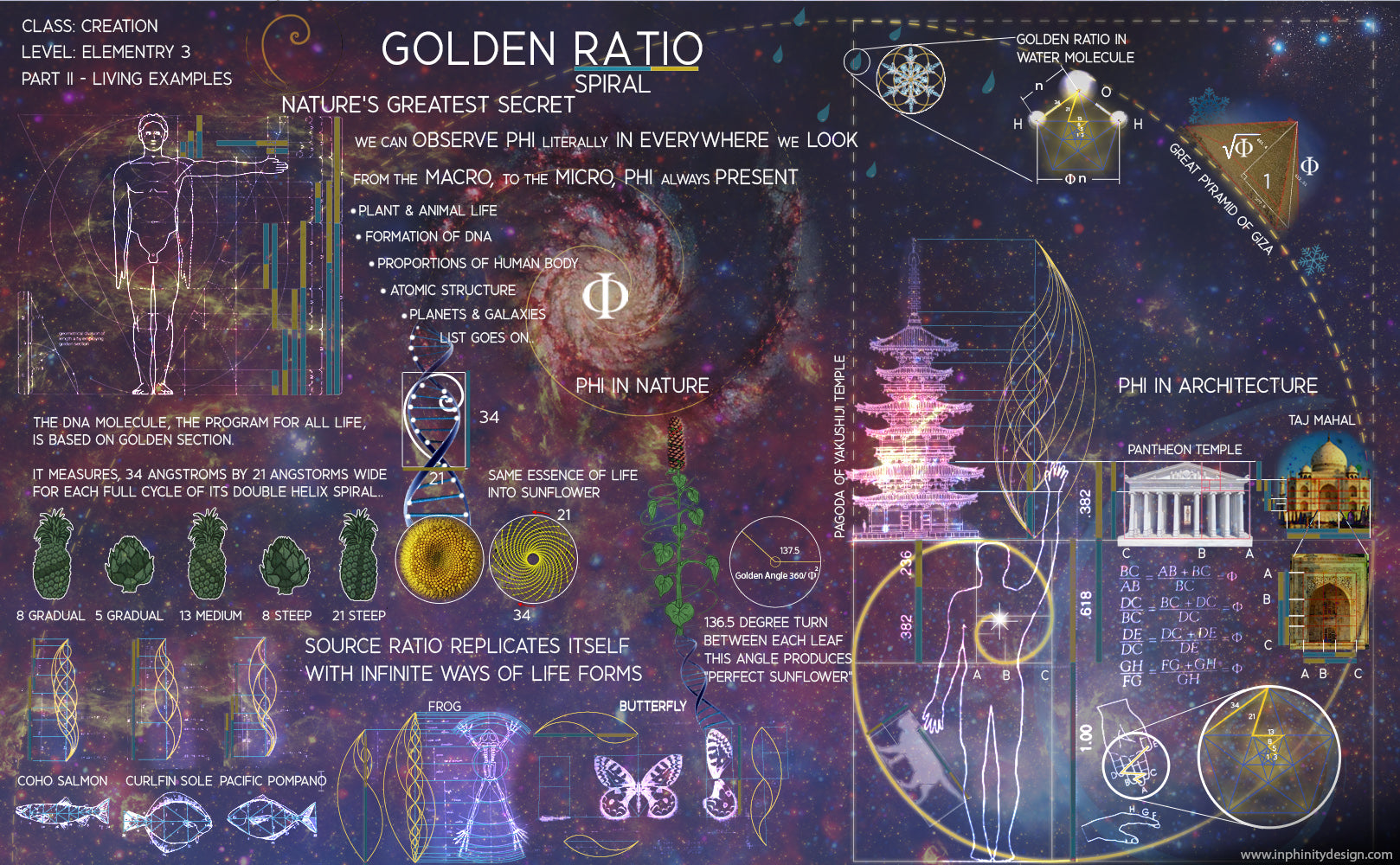 language of creation Torus Golden ratio fibonacci sacred geometry sunflower ying yang harmony balance