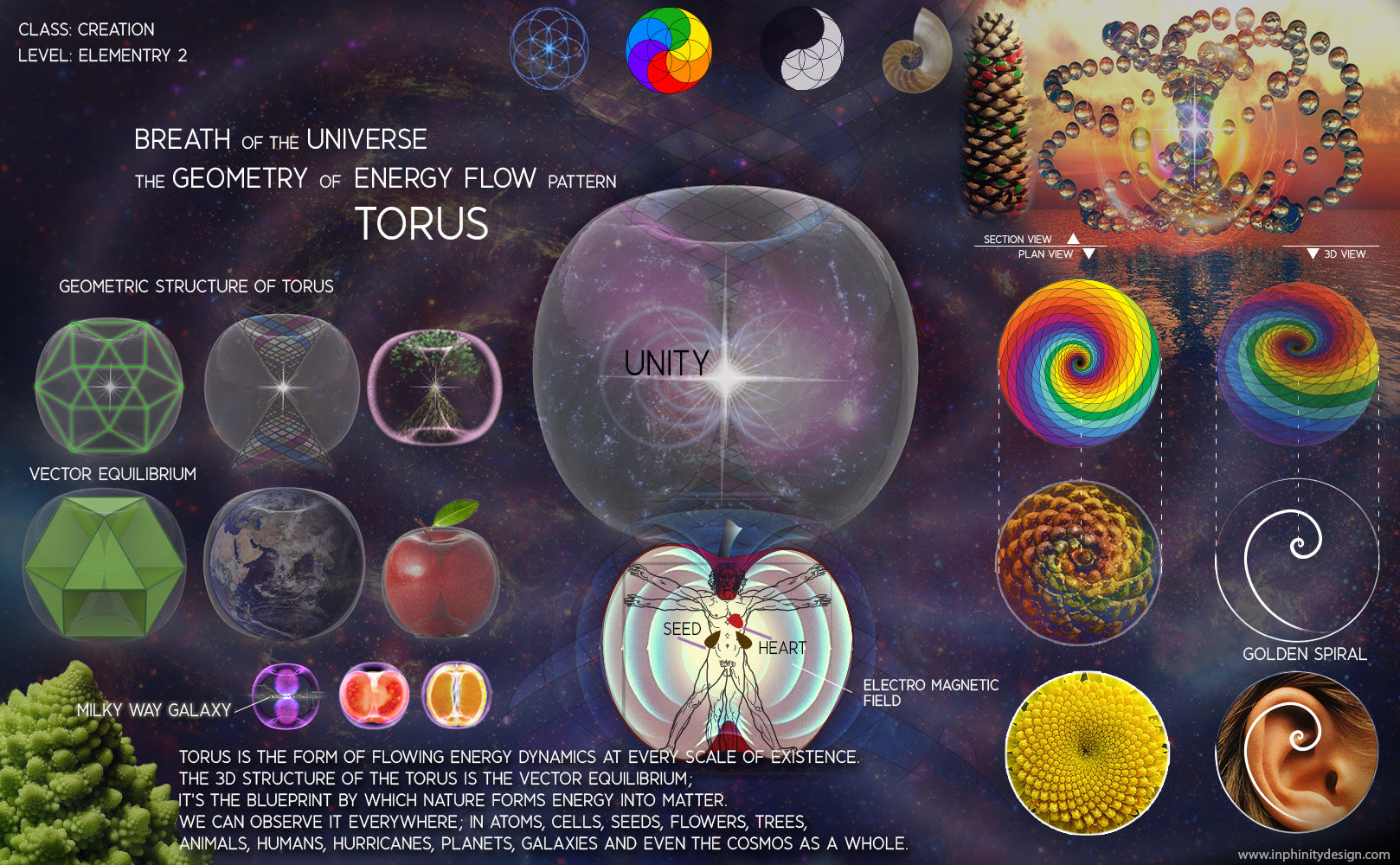 Breath of the Universe Torus Golden ratio fibonacci sacred geometry sunflower ying yang harmony balance