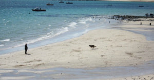 Bamaluz Beach Dog Friendly Beach St Ives Cornwall