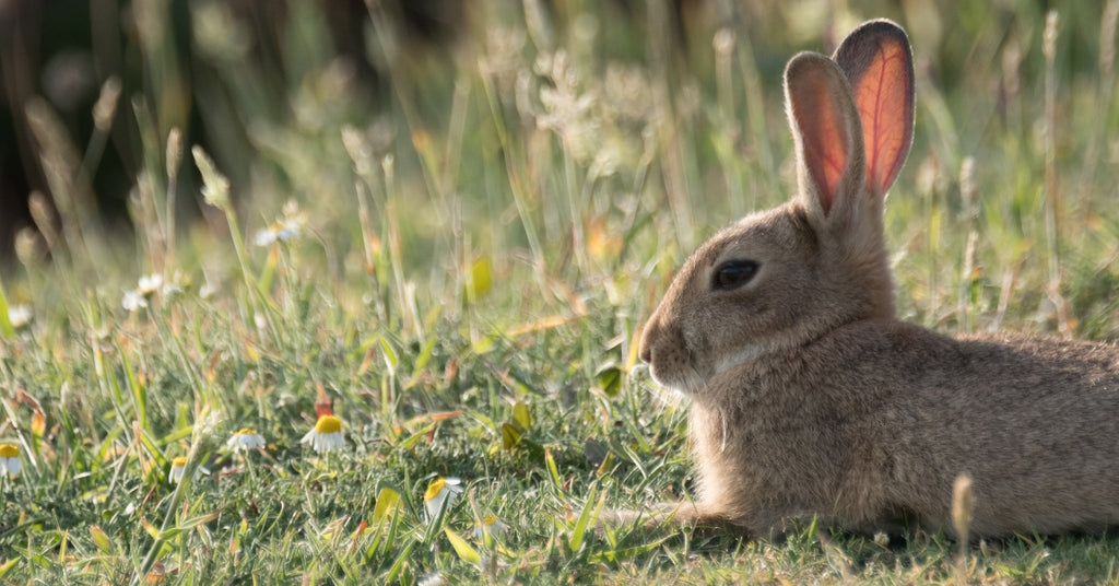 34 Egg-citing Things To Do This Easter In West Cornwall - Easter 2019