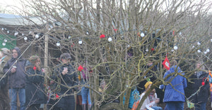 Wassailing St Ives Cornwall