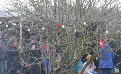 Wassailing In St Ives