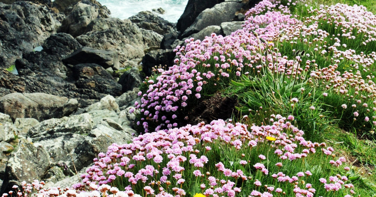 Wildflowers In St Ives Cornwall
