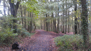 Woods In St Ives Cornwall
