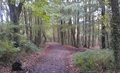 Woods To Visit & Explore Around St Ives Cornwall