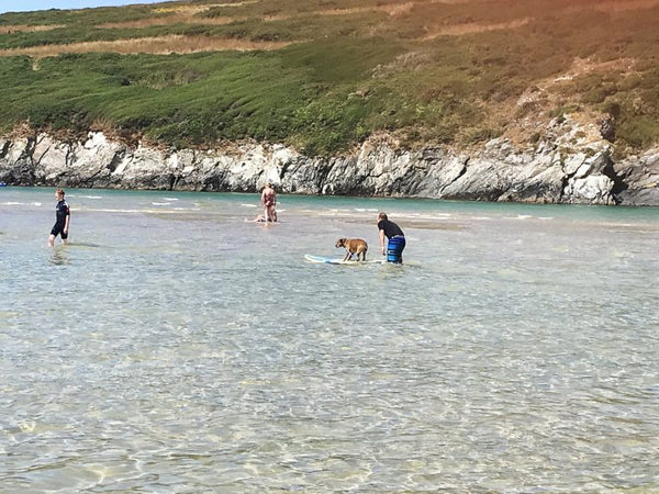 Crantock Beach Newquay Cornwall Dog Friendly Beach