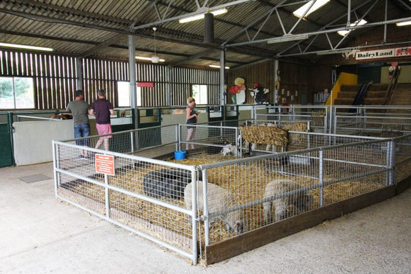 Dairyland Farm World Newquay Cornwall Animal Barn