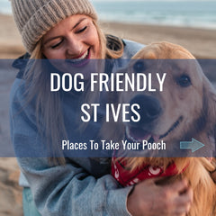 Dog Friendly St Ives Cornwall
