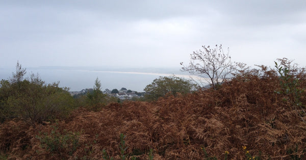 Steeple Woodland Nature Reserve View Over St Ives Bay