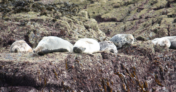 Things To Do In Winter In Cornwall - Seals