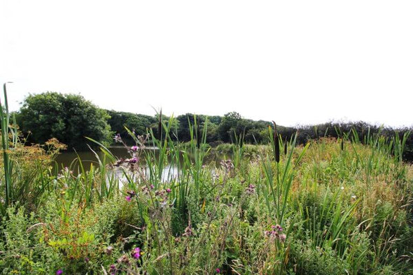 Glamping Trevella Park Cornwall - Nature Reserve