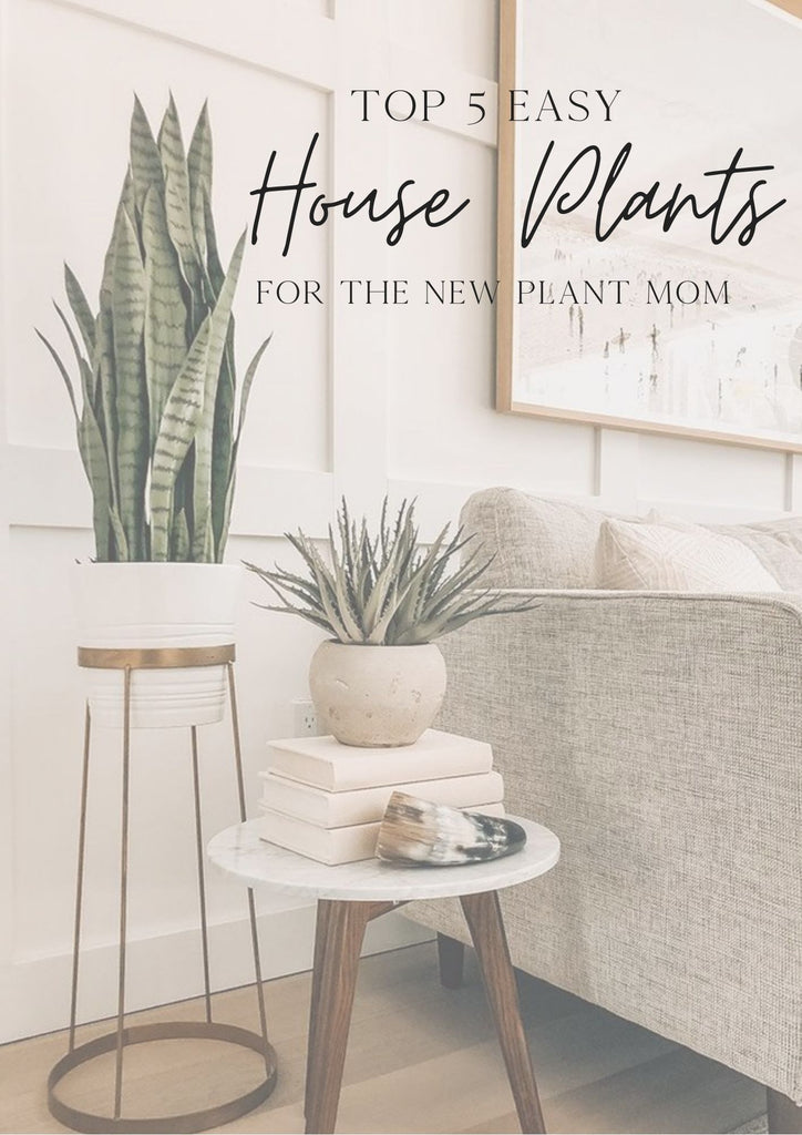 Top 5 Easy House Plants for a New Plant Mom