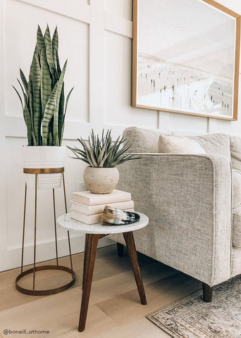 Neutral home decor with a snake plant house plant.