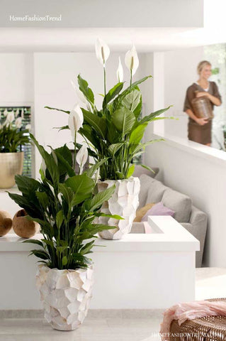 Neutral home decor and an easy to maintain peace lily house plant