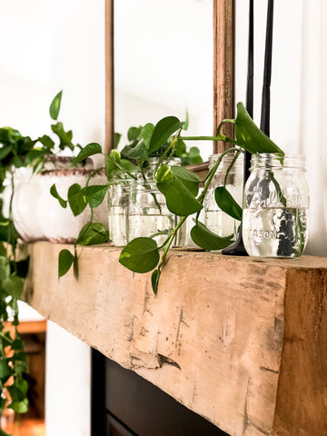 Neutral modern home decor with pothos plant mantel decoration.