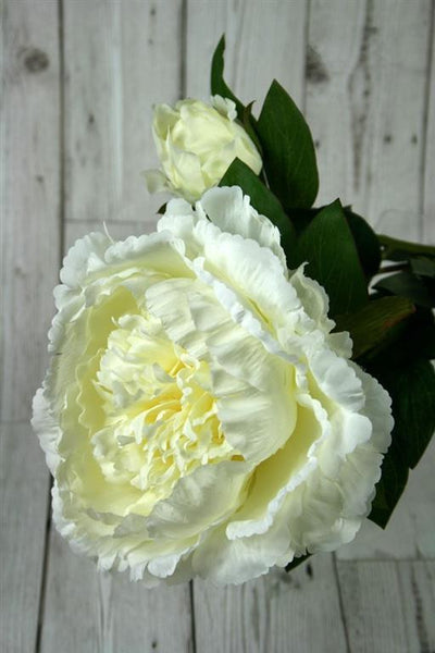 large Open Peony with bud