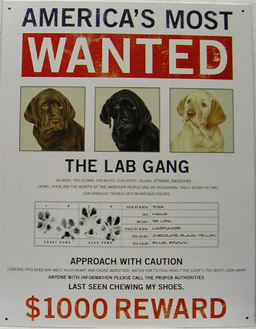 America's Most Wanted-The Lab Gang